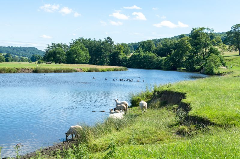 Welsh Water awarded £1m to expand PestSmart project