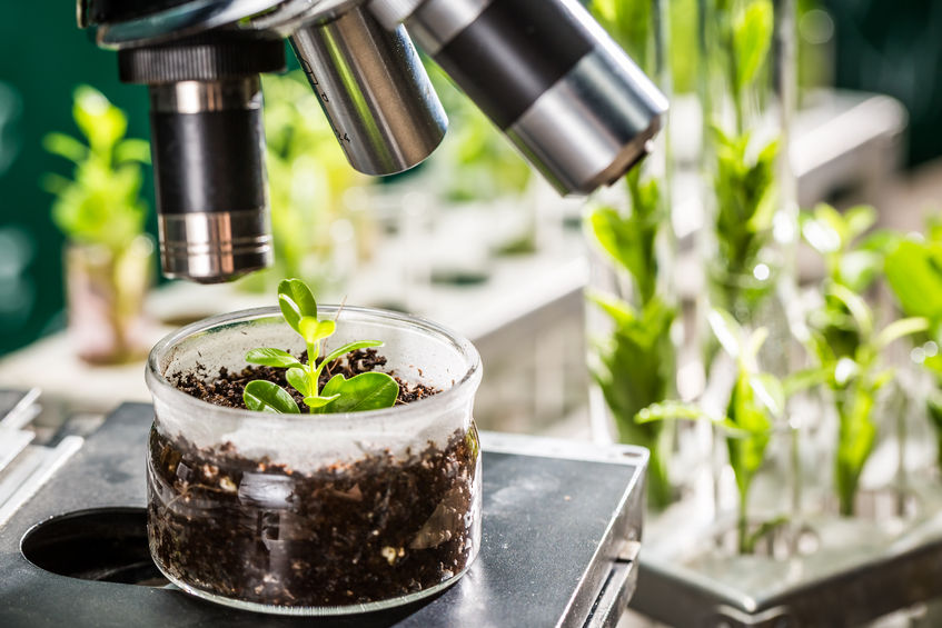Scientists look at space-inspired speed breeding for crop improvement