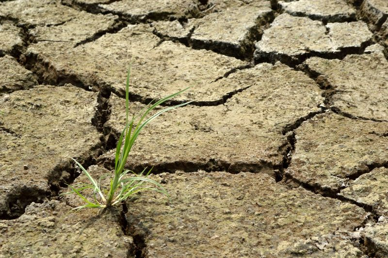 Extreme weather: Farmers 'not yet out of the woods' but concerns linger