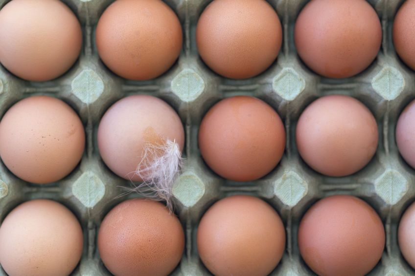 Farmers call on public to end obsession with large eggs