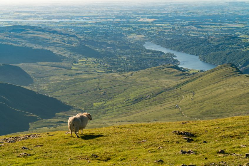 Demand for Welsh lamb grows in Asia amid Brexit uncertainty