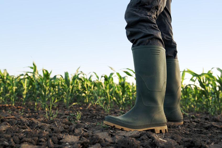 Long-awaited Inheritance Tax Review 'encouraging' for farming families