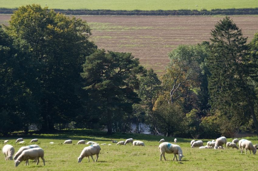 Farmers relieved as Powys Council rejects plans to sell Farming Estate