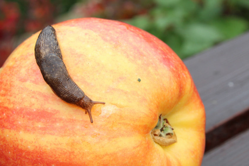 Farmers offered environmentally-friendly slug pellets at 50% discount
