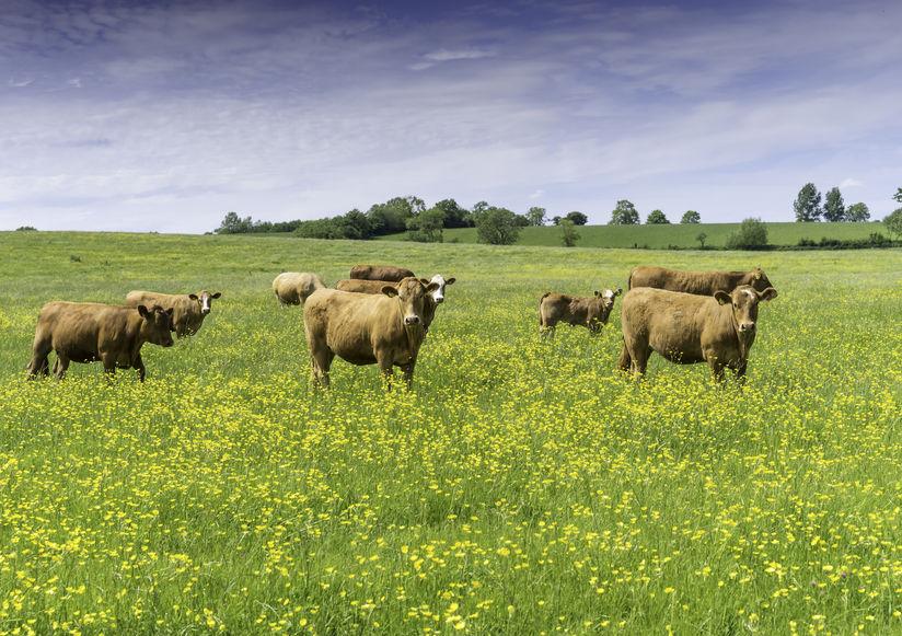 Climate change: Amount of criticism towards UK livestock farmers 'unfair'