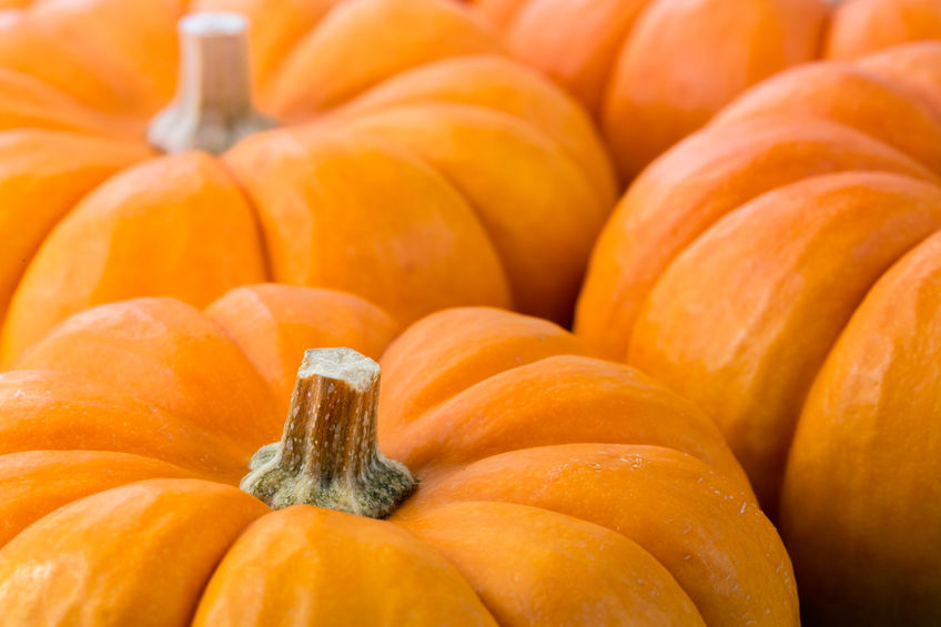 Halloween popularity in UK opens 'new opportunities' for farmers