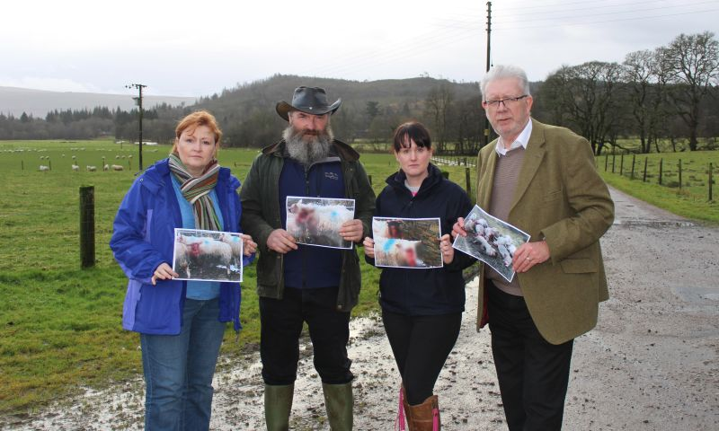 MSPs meet with victim of one of Scotland's worst cases of livestock worrying
