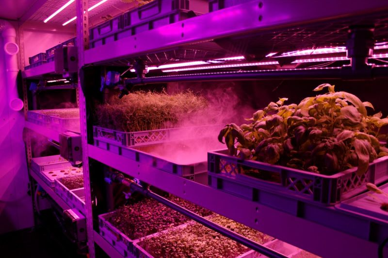 In aeroponics, instead of using soil, plant roots are suspended in a nutrient-dense mist