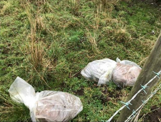 Six dead calves tied in plastic bags dumped in fields