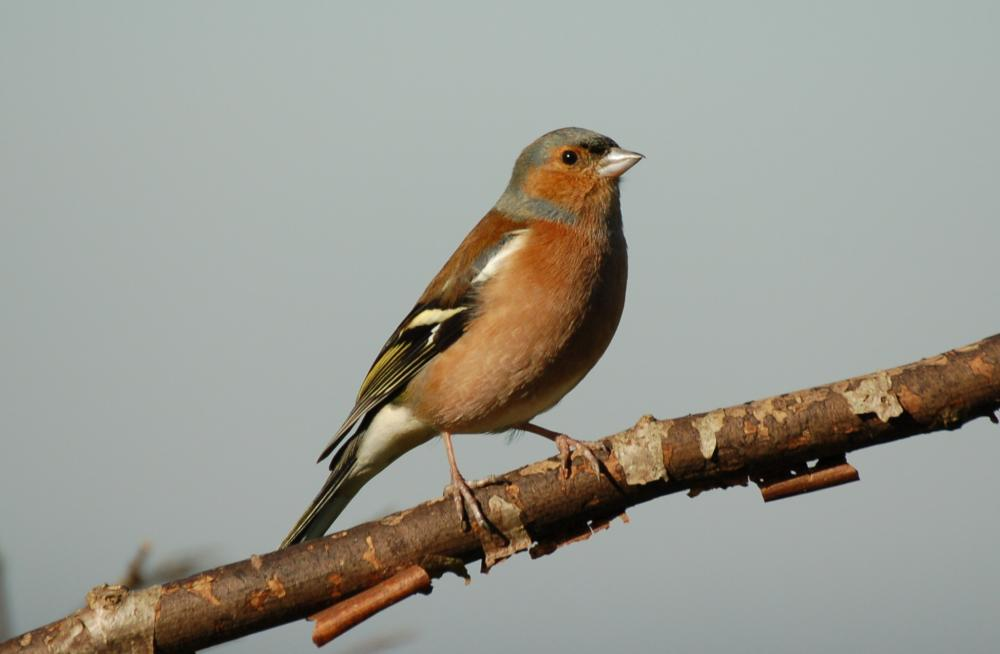 Rallying cry for farmers to count farmland birds