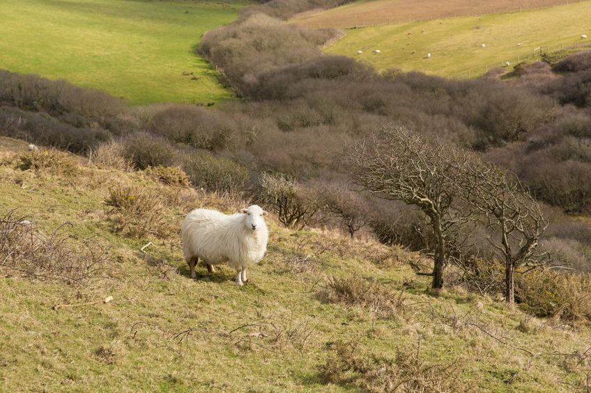 Hill farming parliamentary group launches