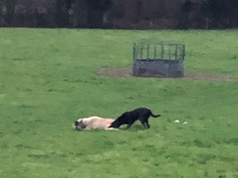 Owner of dog that killed sheep agrees to compensate farmer