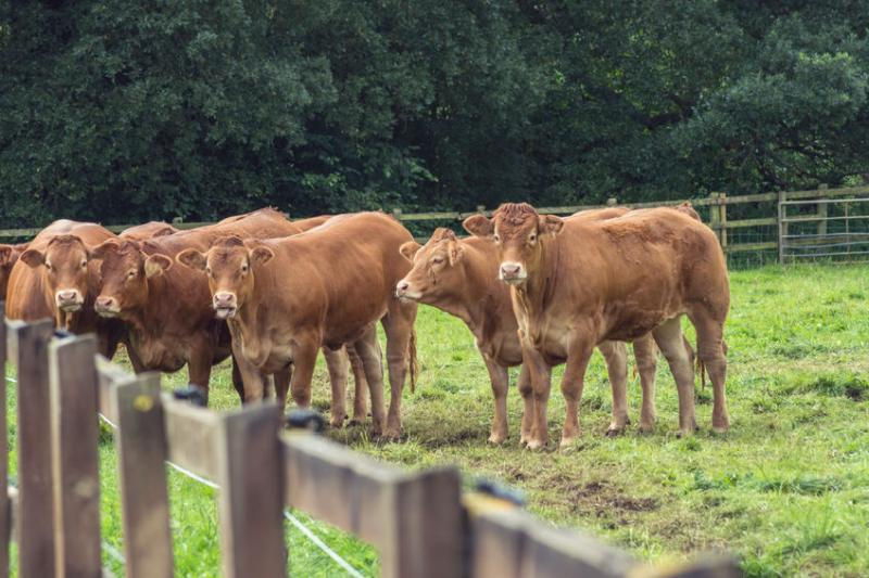 NI farmers 'frustrated' at cattle imports despite local abundance
