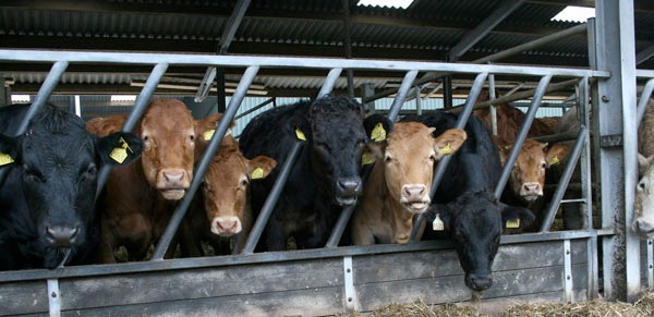 45 countries still use animal growth promoters, report says