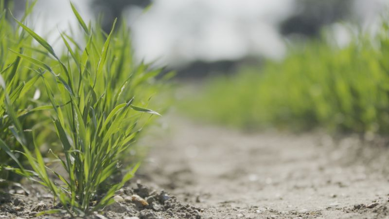 New research could help farmers deal with damaging weather fluctuations