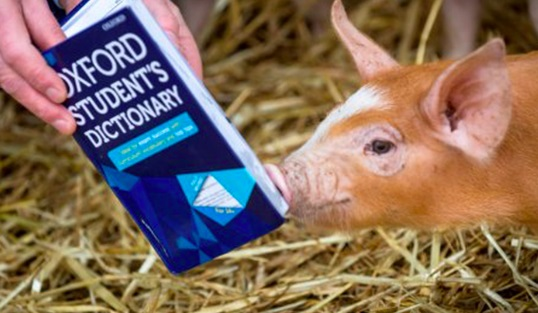 Campaign to remove 'pig out' from dictionary shortlisted for award