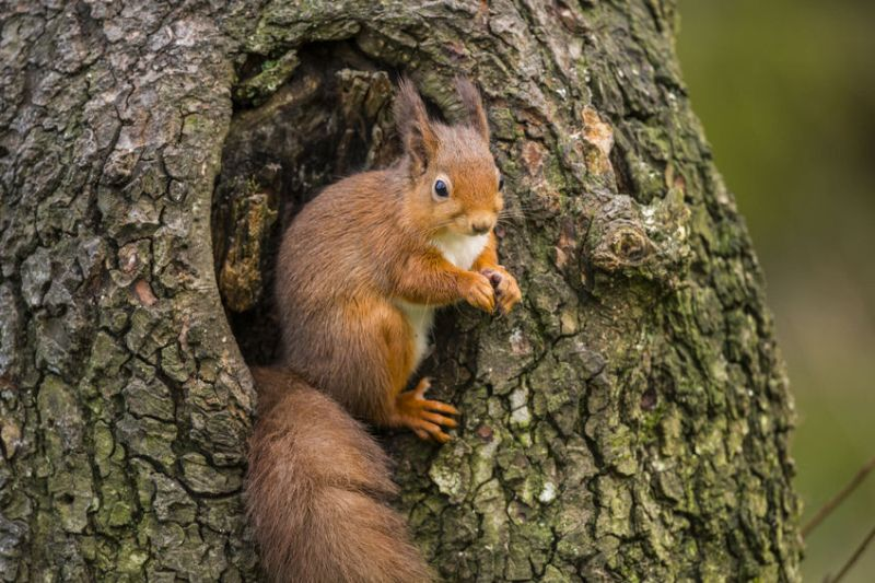 New fund seeks 'large-scale projects' to boost Scottish wildlife