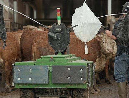 'R2DMoo': Bag-waving robot introduced on US beef farm