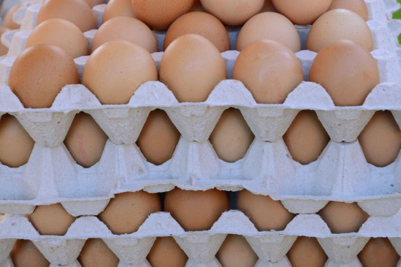 Dutch farmers' leader warns UK of cage-free egg production