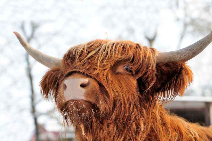 Scottish farmers rally behind 'Know Your Beef' campaign