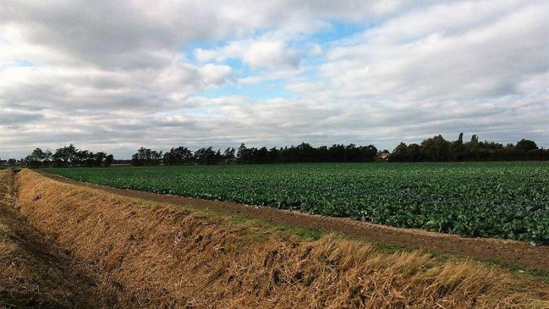 Five Cambridgeshire county farms need new tenants