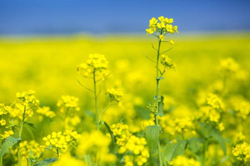 www.farminguk.com