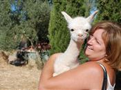 Breeding alpacas in Andalucia