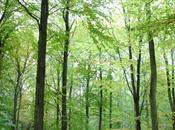 New body to run UK's public forests