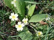 Plant growers report 'catastrophic' spri...