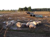 Mega farm fears threatening UK livestock...