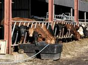 Farmers face substantial tax bills over ...