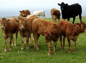 Gap between beef retail and farmgate pri...