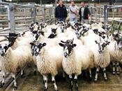 Retailers urged to back British lamb