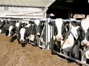 Milk producers warned over cow health du...