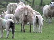 Prevent lamb scours with pasture and par...