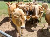 Small decline in bovine TB in 2014 is 'n...