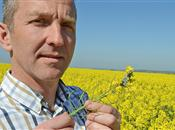Insect pests hot up in oilseed rape