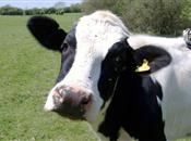 No sign of improvement for dairy farmers...