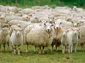 Work starts now for 2016 lamb crop, says...