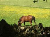 UK at risk of another 'horsegate' scanda...