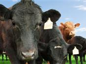 BSE, or 'mad cow disease', found in dead...