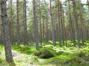 Record year for UK forestry says latest ...