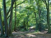 Forestry worth nearly £1 billion to Scot...