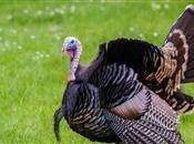 Feeding your Christmas turkey