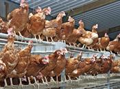 Antibiotic use in farming posing a 'seri...
