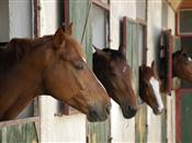 'Beware the tax pitfalls of horses and l...