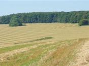 Big prices for farmland 'less common' th...