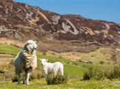 'Welsh food and farming sector can capit...