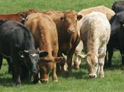 UK plans to tackle bovine TB and other a...