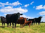 'The farming industry cannot escape comp...
